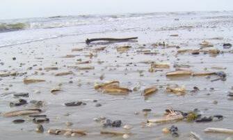 koffervolgedichten.nl/wadden/zee en golven